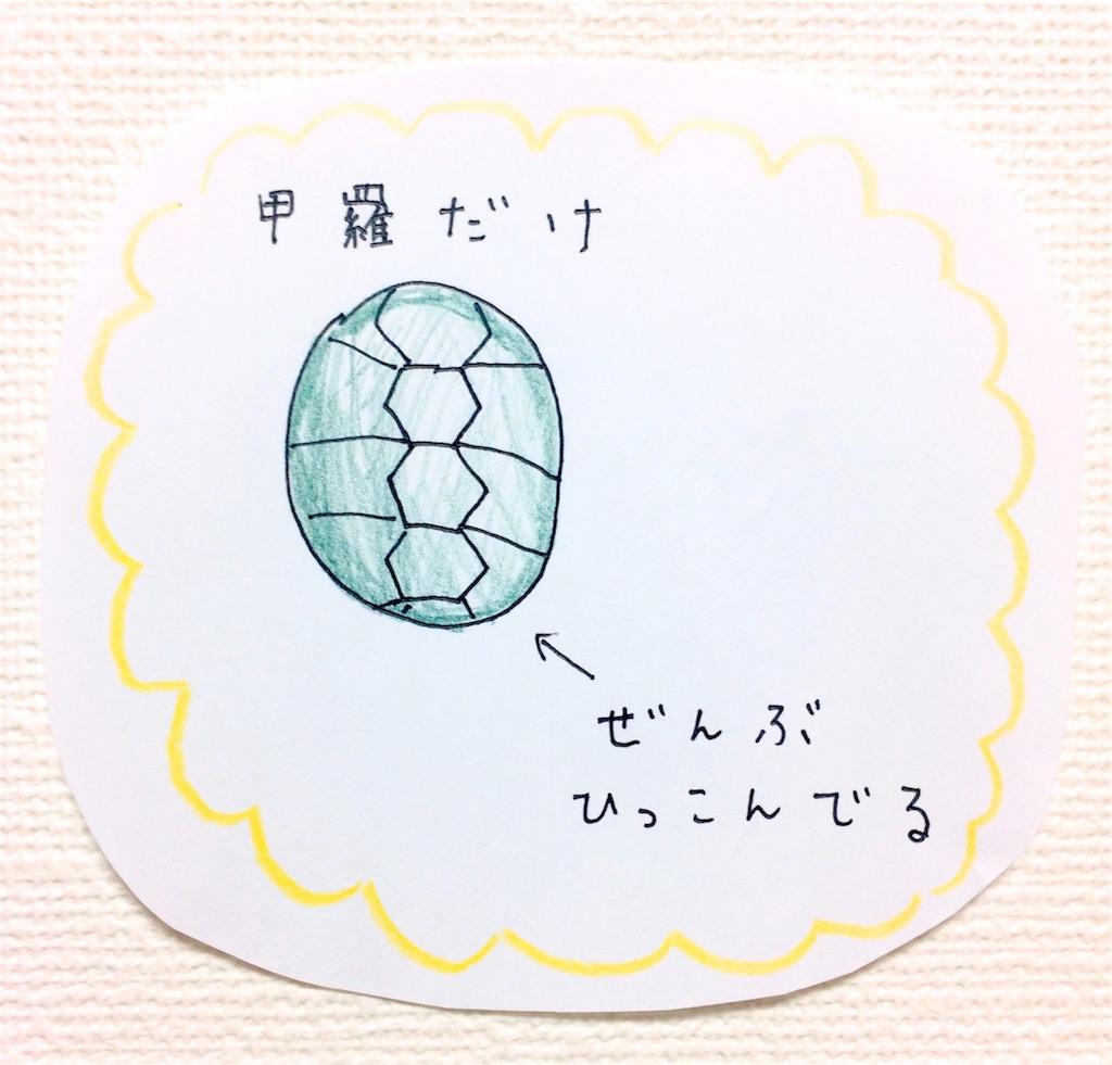 亀の甲羅ボールペンイラスト