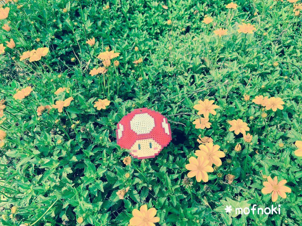 スーパーキノコとお花